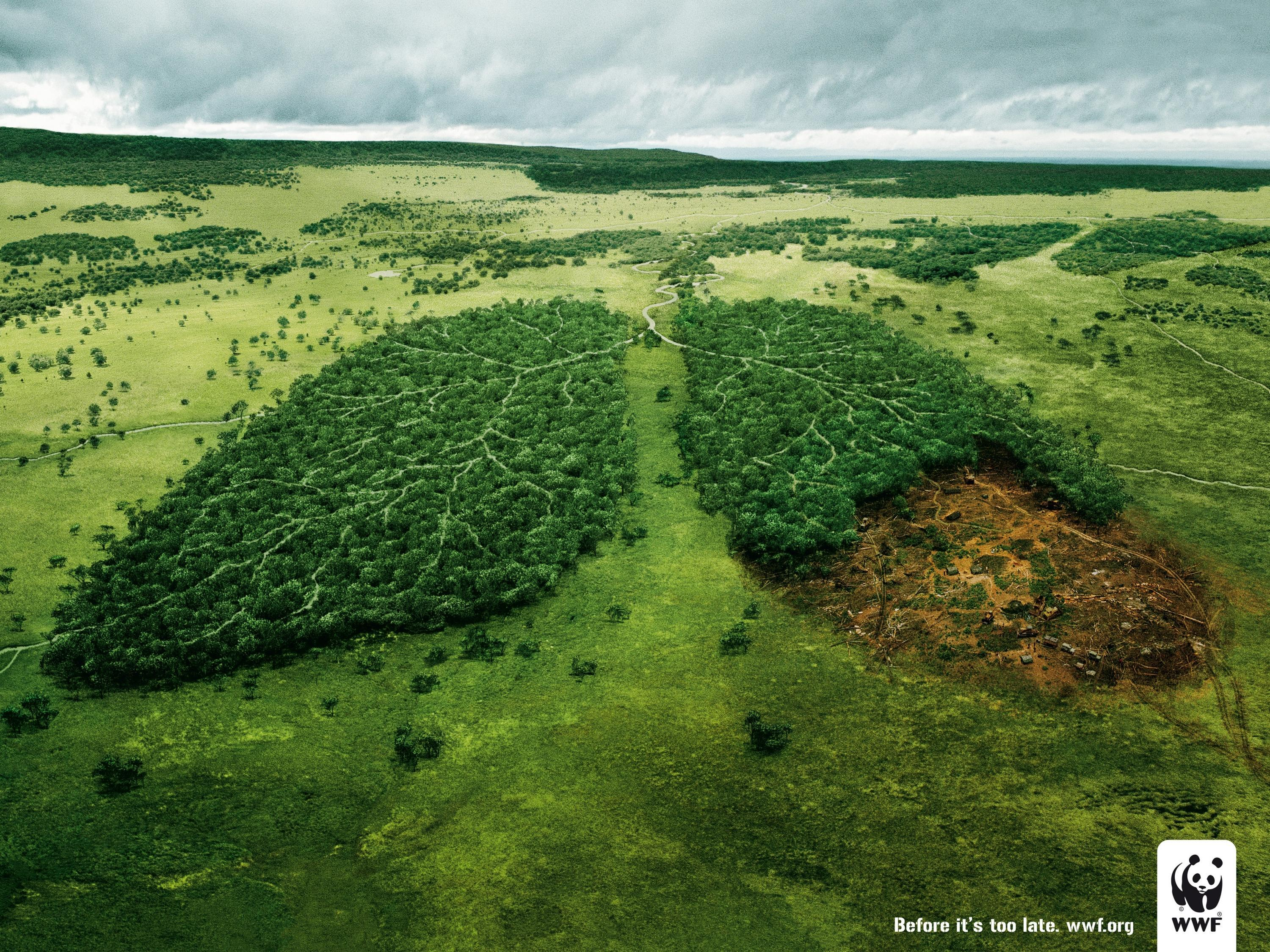 Wwf (World Wide Fund For Nature) Environmental Awareness: Lungs ...