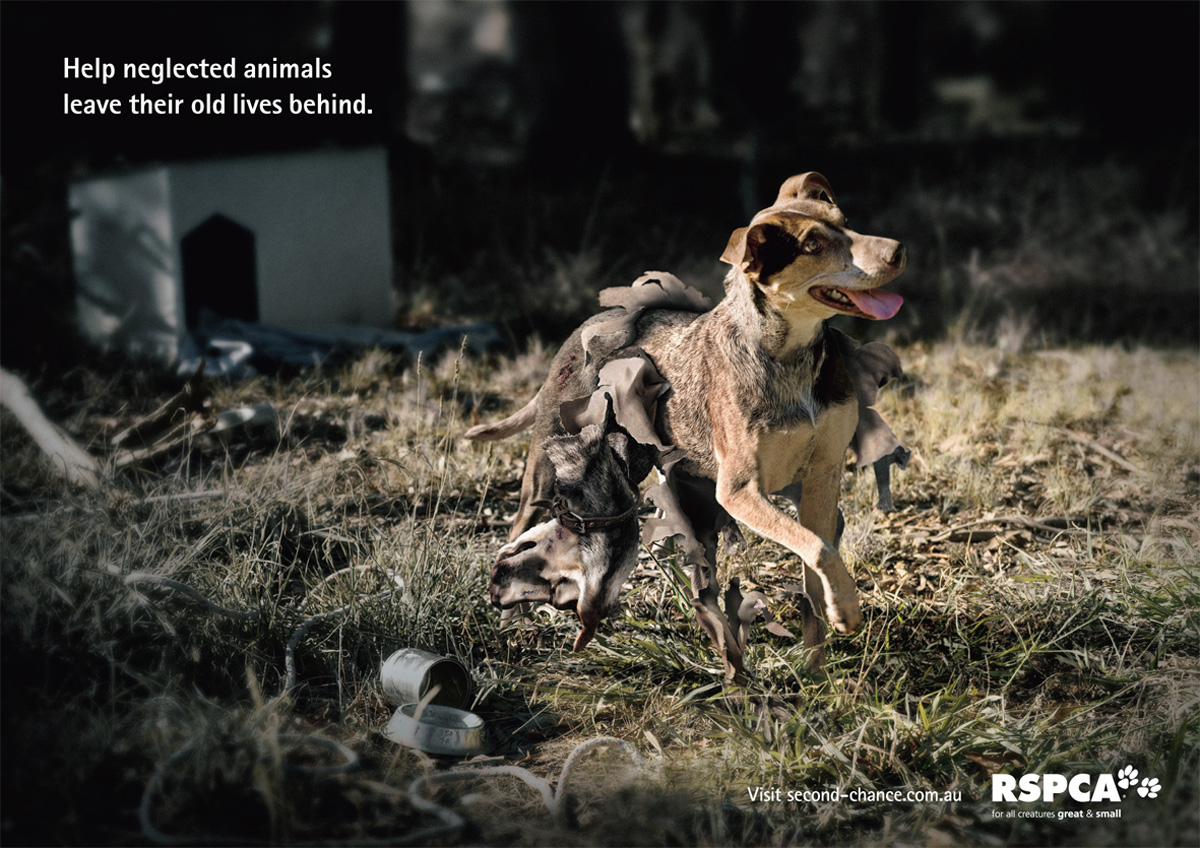Animal Abuse Quotes Rspca Horse Dog  Adeevee