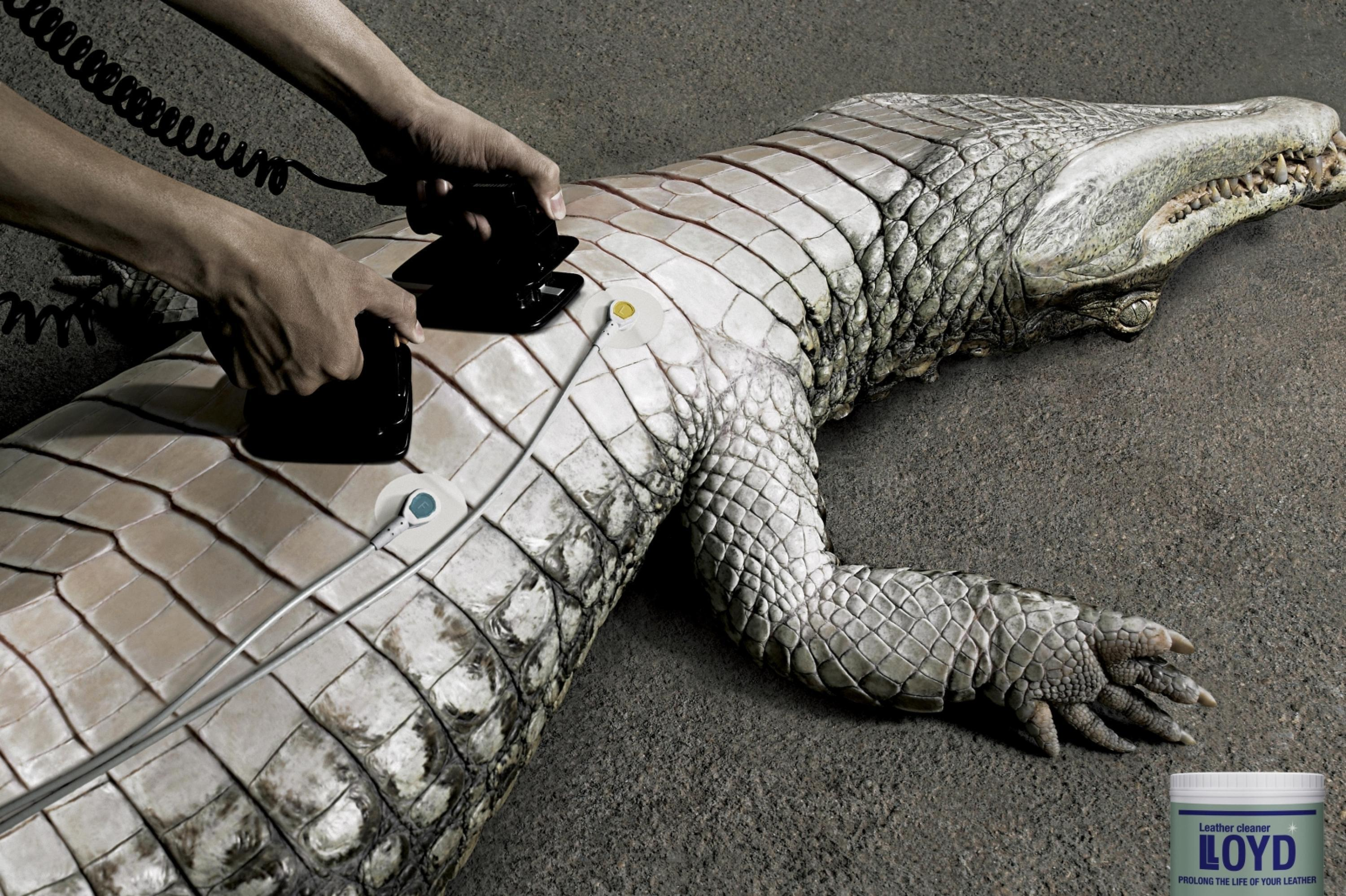 Alligator Leather Vs Cow Leather Best Photos Of Cow
