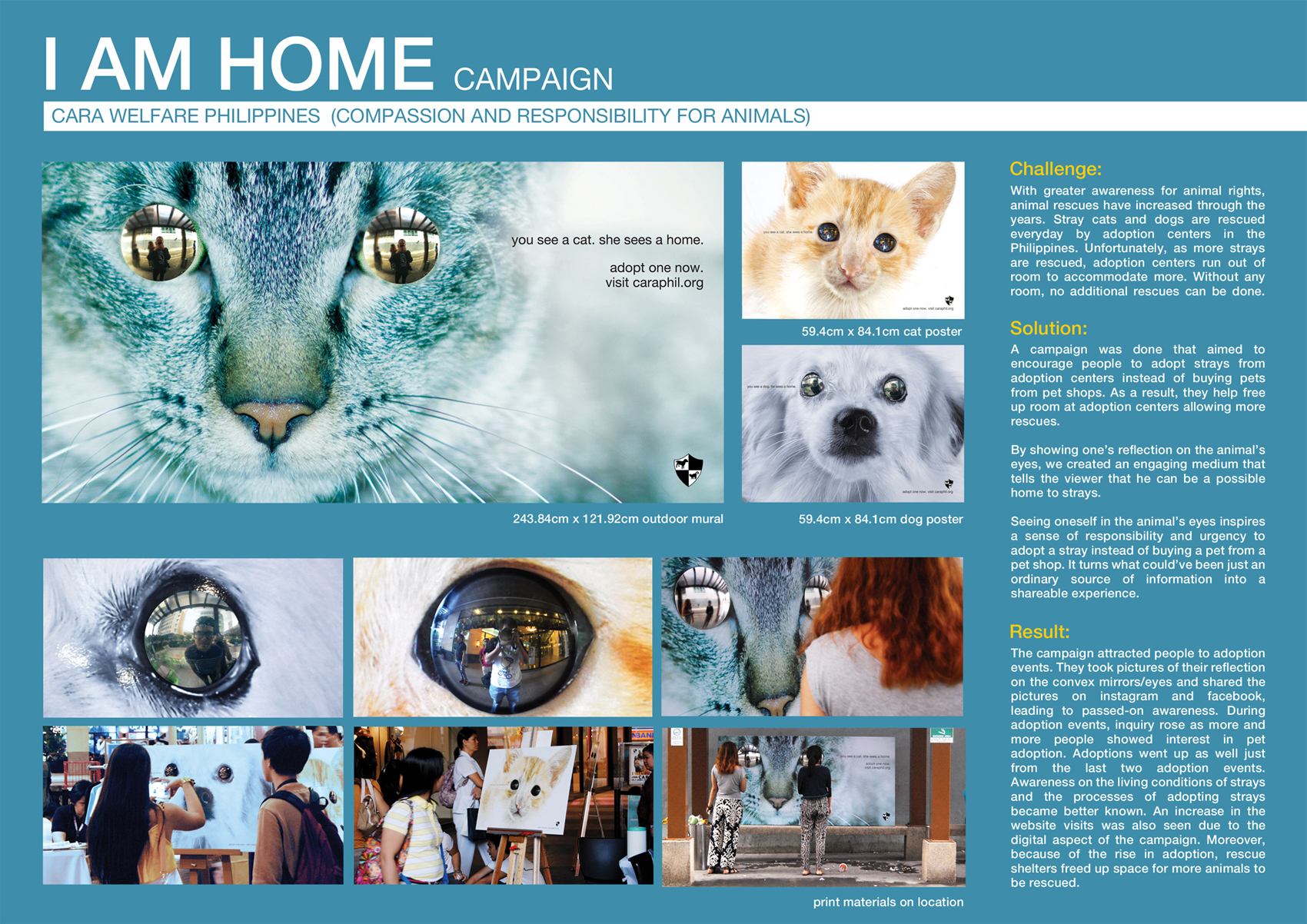 Cara Welfare Pet Adoption Program I Am Home Campaign Adeevee