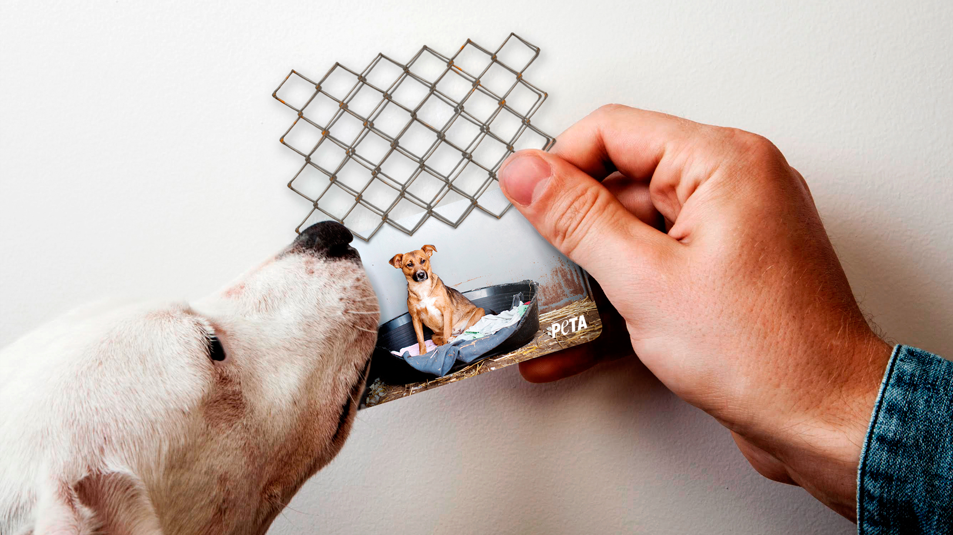 PETA: PETA Business Cards - Adeevee